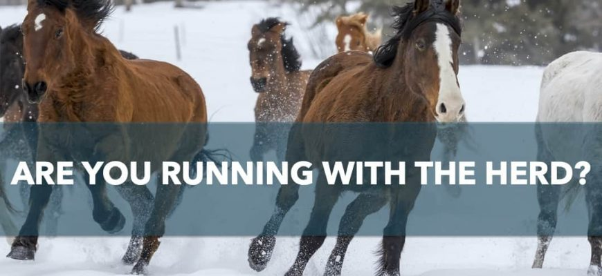 Are you running with the herd?